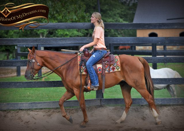 006-Beau-Sorrel-AQHA-Gelding-For-Sale