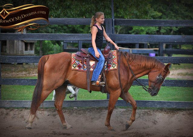 007-Beau-Sorrel-AQHA-Gelding-For-Sale
