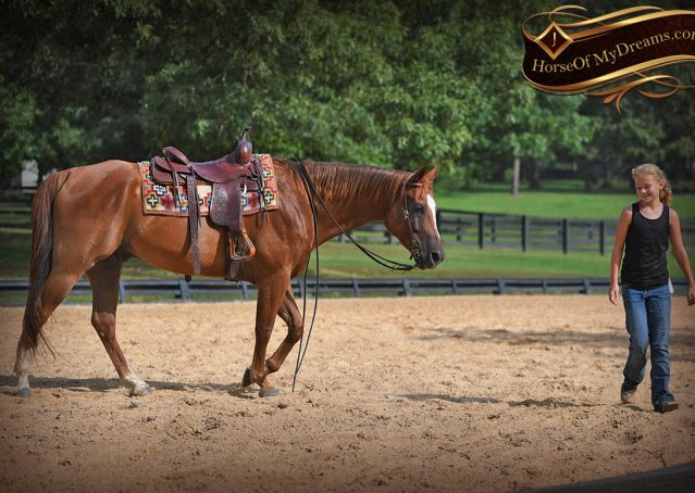 011-Beau-Sorrel-AQHA-Gelding-For-Sale