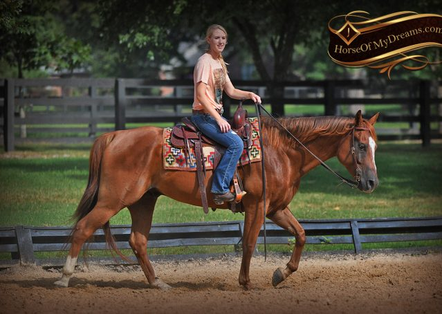 013-Beau-Sorrel-AQHA-Gelding-For-Sale