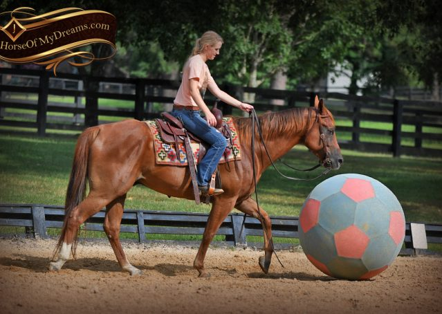 014-Beau-Sorrel-AQHA-Gelding-For-Sale