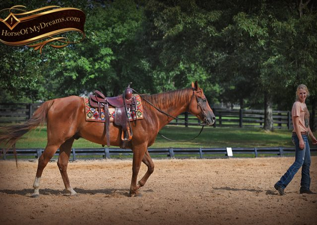 019-Beau-Sorrel-AQHA-Gelding-For-Sale