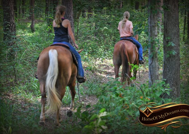 021-Beau-Sorrel-AQHA-Gelding-For-Sale