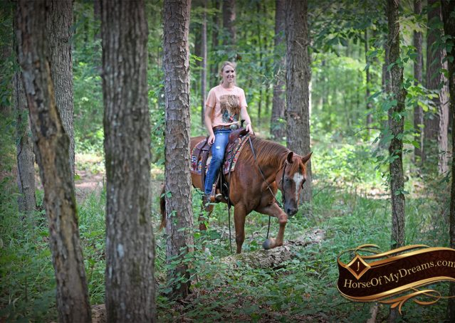 022-Beau-Sorrel-AQHA-Gelding-For-Sale