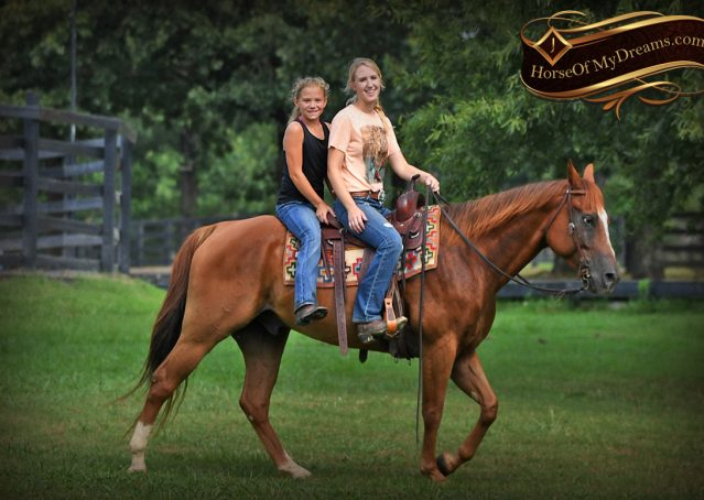 023-Beau-Sorrel-AQHA-Gelding-For-Sale