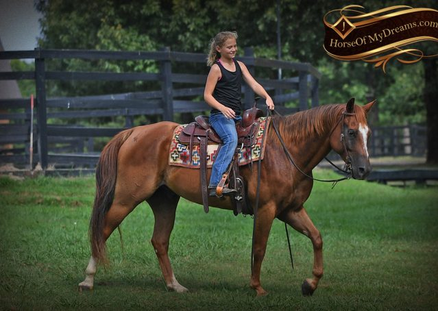 025-Beau-Sorrel-AQHA-Gelding-For-Sale