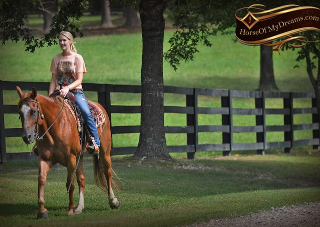 029-Beau-Sorrel-AQHA-Gelding-For-Sale