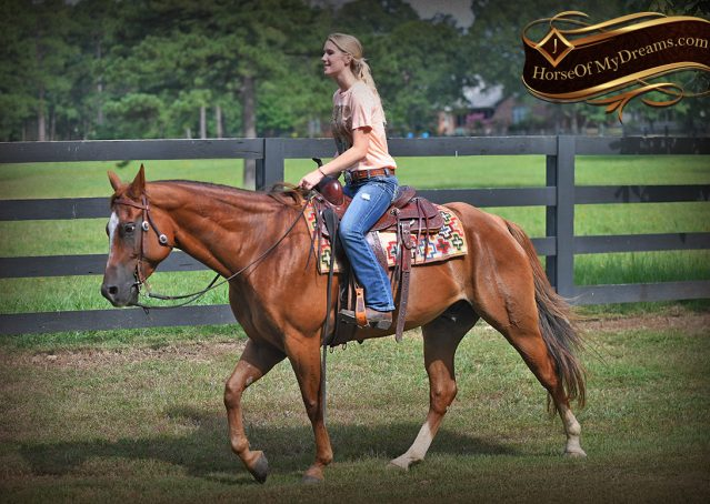 030-Beau-Sorrel-AQHA-Gelding-For-Sale