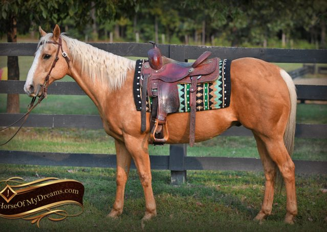 001-Indigo-AQHA-Golden-Palomino-Gelding-For-Sale