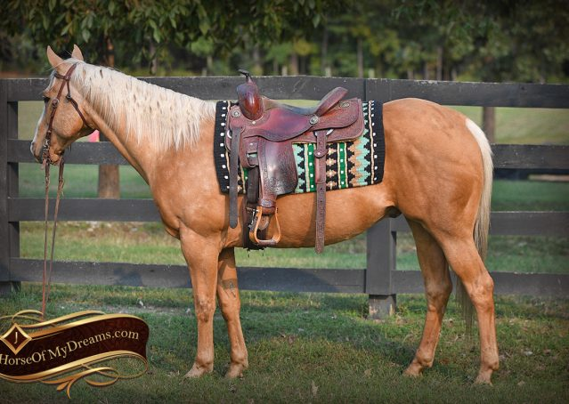 002-Indigo-AQHA-Golden-Palomino-Gelding-For-Sale