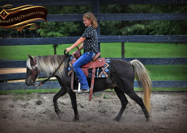 002-Irish-Chocolate-Palomino-kids-Pony-For-Sale