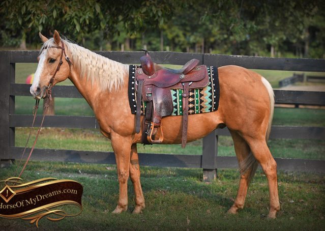 003-Indigo-AQHA-Golden-Palomino-Gelding-For-Sale