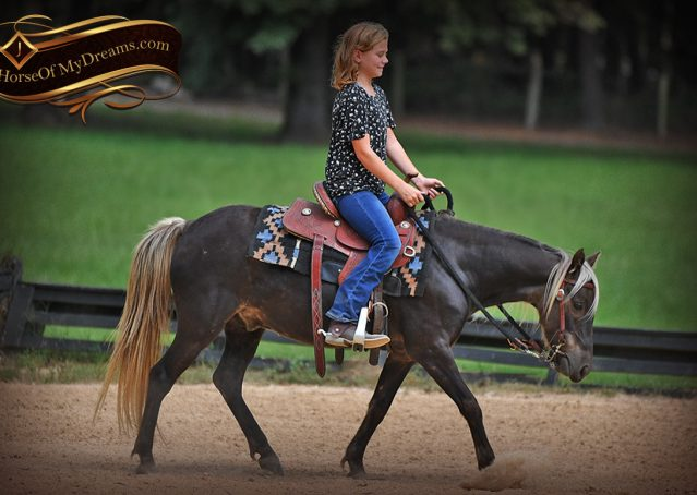 003-Irish-Chocolate-Palomino-kids-Pony-For-Sale
