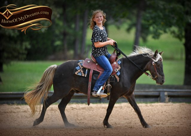 005-Irish-Chocolate-Palomino-kids-Pony-For-Sale