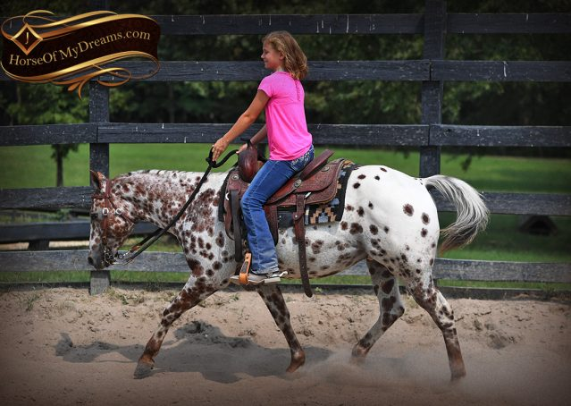 005-Sully-Leopard-appaloosa-POA-kids-pony-fancy-for-sale