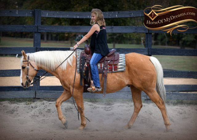 006-Indigo-AQHA-Golden-Palomino-Gelding-For-Sale