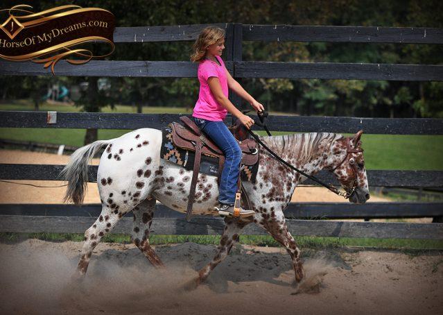 006-Sully-Leopard-appaloosa-POA-kids-pony-fancy-for-sale