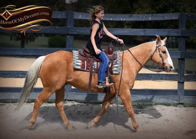 007-Indigo-AQHA-Golden-Palomino-Gelding-For-Sale