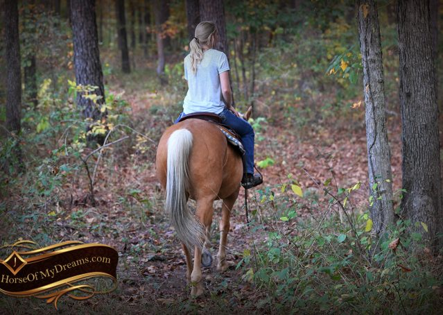 008-Indigo-AQHA-Golden-Palomino-Gelding-For-Sale