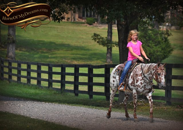 008-Sully-Leopard-appaloosa-POA-kids-pony-fancy-for-sale