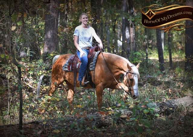009-Indigo-AQHA-Golden-Palomino-Gelding-For-Sale