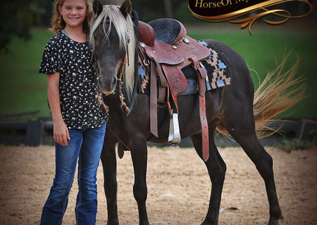 009-Irish-Chocolate-Palomino-kids-Pony-For-Sale
