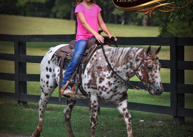 009-Sully-Leopard-appaloosa-POA-kids-pony-fancy-for-sale