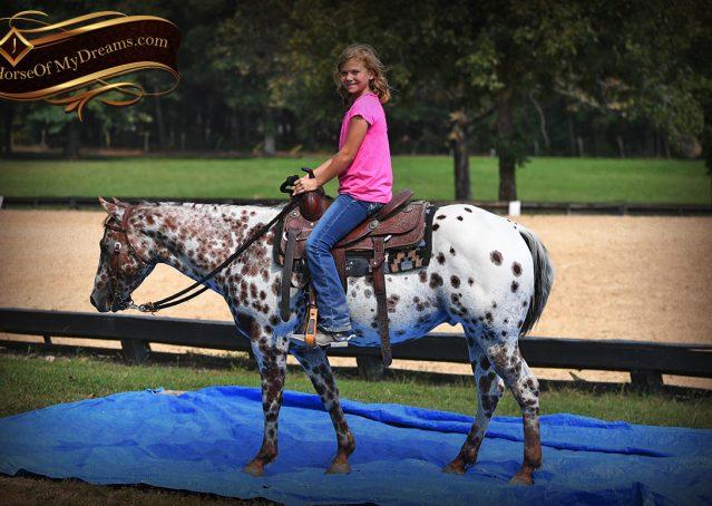 010-Sully-Leopard-appaloosa-POA-kids-pony-fancy-for-sale