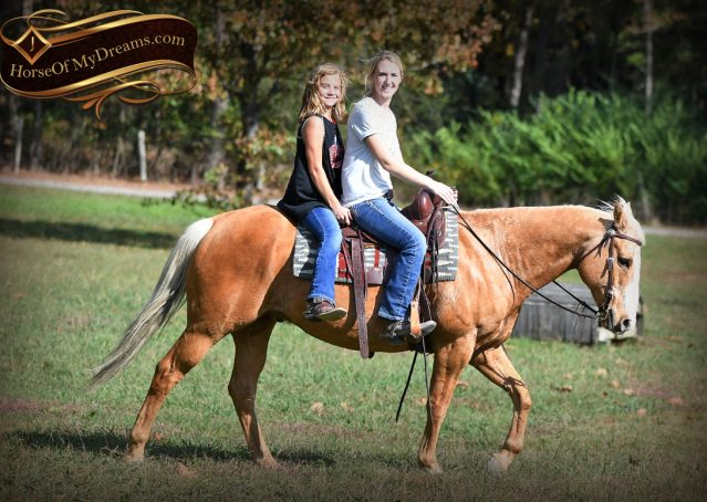 011-Indigo-AQHA-Golden-Palomino-Gelding-For-Sale