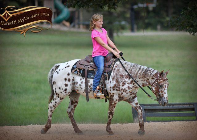 011-Sully-Leopard-appaloosa-POA-kids-pony-fancy-for-sale