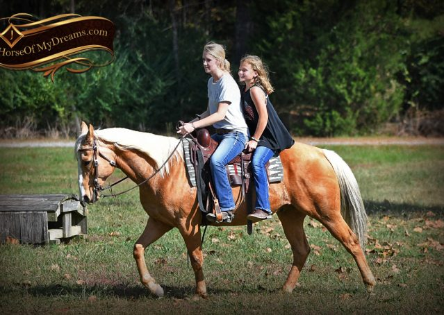 012-Indigo-AQHA-Golden-Palomino-Gelding-For-Sale