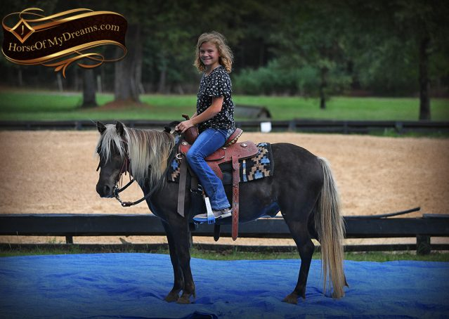 012-Irish-Chocolate-Palomino-kids-Pony-For-Sale