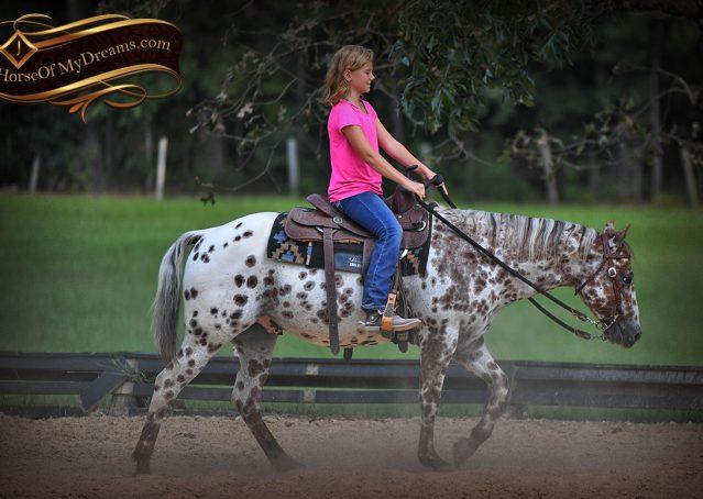 012-Sully-Leopard-appaloosa-POA-kids-pony-fancy-for-sale