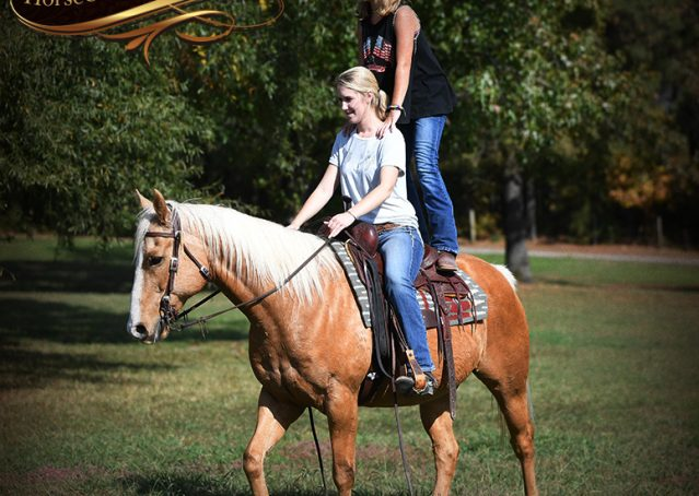 013-Indigo-AQHA-Golden-Palomino-Gelding-For-Sale
