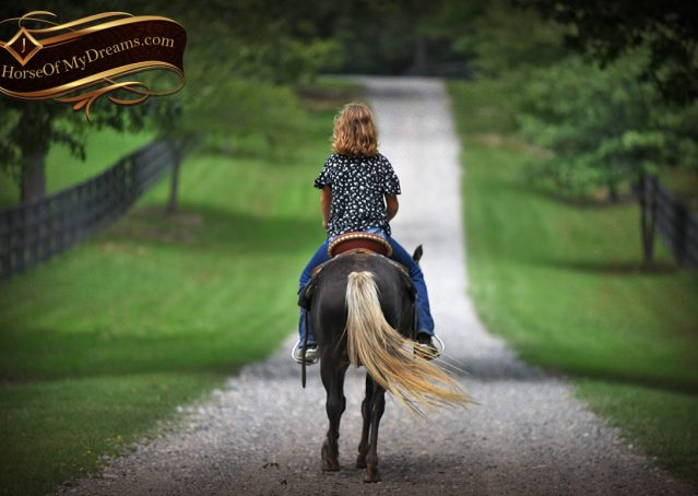 013-Irish-Chocolate-Palomino-kids-Pony-For-Sale