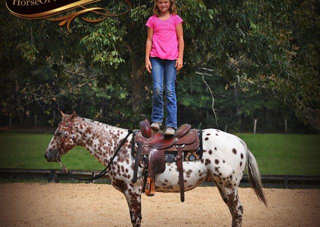 013-Sully-Leopard-appaloosa-POA-kids-pony-fancy-for-sale