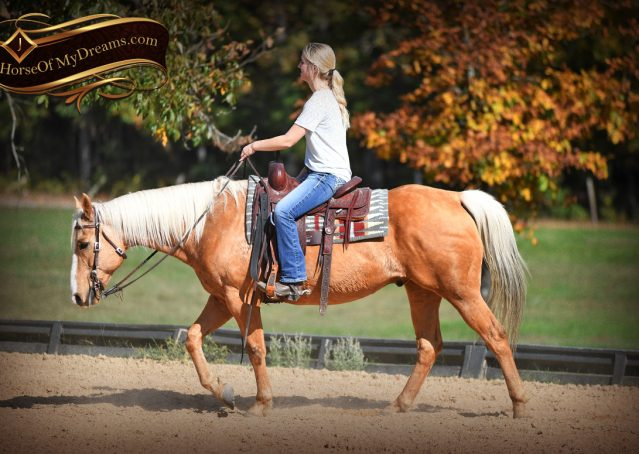 014-Indigo-AQHA-Golden-Palomino-Gelding-For-Sale
