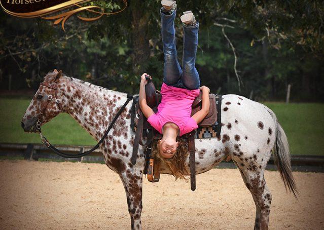 014-Sully-Leopard-appaloosa-POA-kids-pony-fancy-for-sale