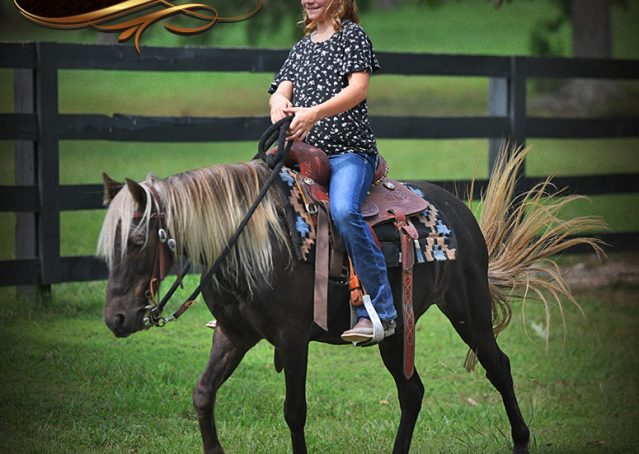 015-Irish-Chocolate-Palomino-kids-Pony-For-Sale