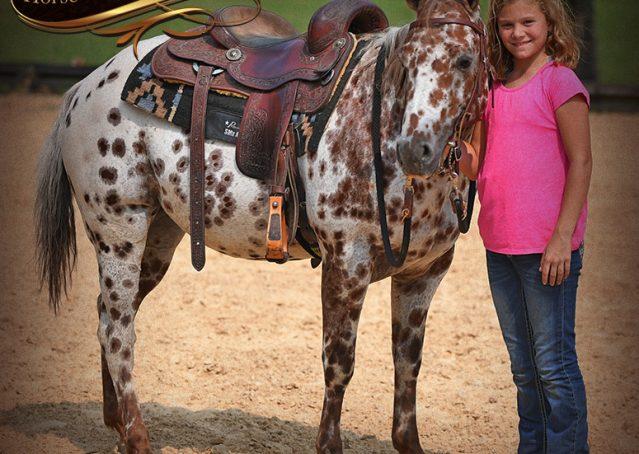 015-Sully-Leopard-appaloosa-POA-kids-pony-fancy-for-sale