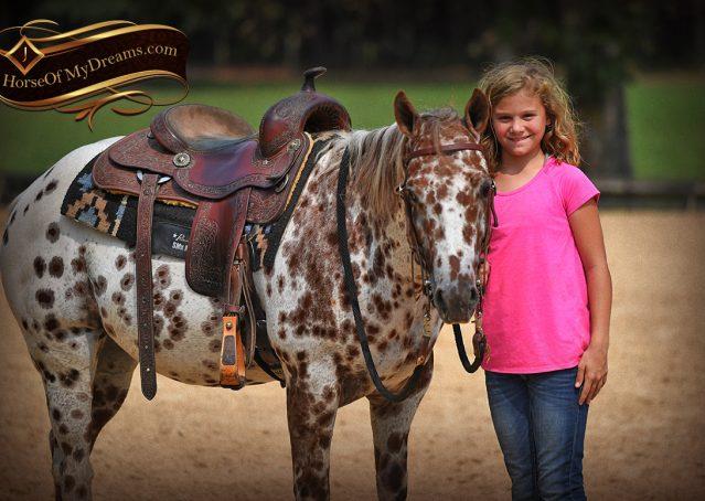 016-Sully-Leopard-appaloosa-POA-kids-pony-fancy-for-sale