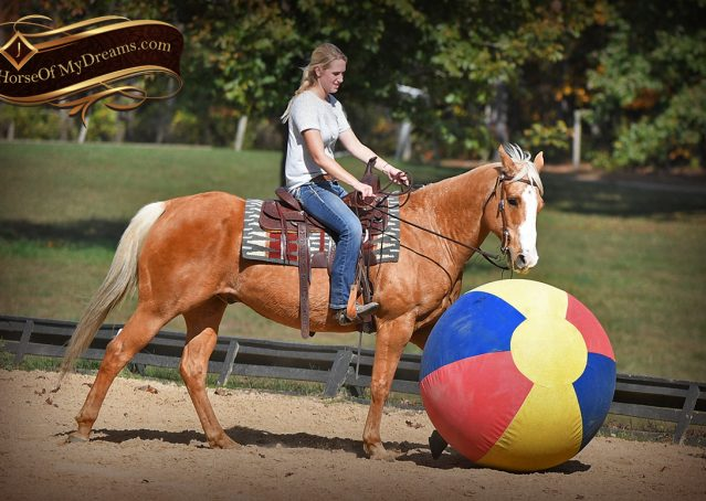 017-Indigo-AQHA-Golden-Palomino-Gelding-For-Sale