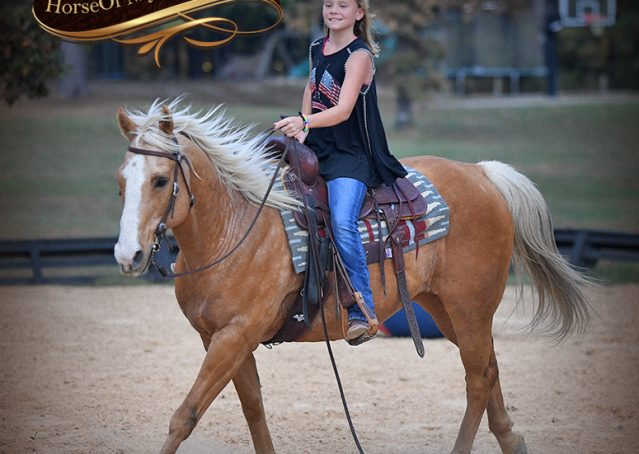 018-Indigo-AQHA-Golden-Palomino-Gelding-For-Sale
