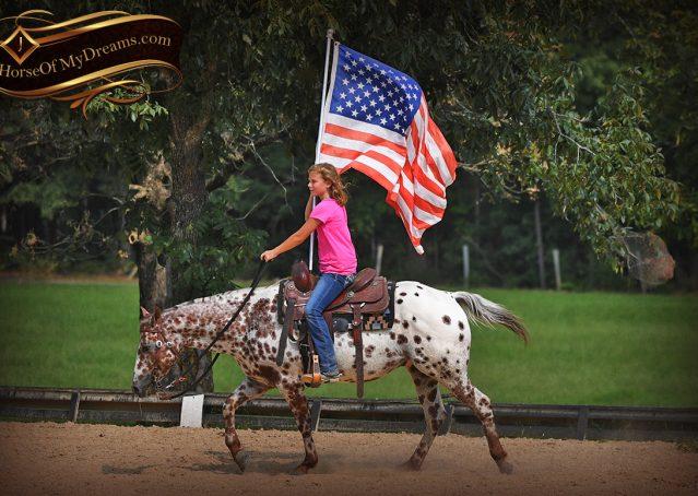 020-Sully-Leopard-appaloosa-POA-kids-pony-fancy-for-sale