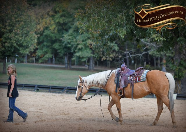 022-Indigo-AQHA-Golden-Palomino-Gelding-For-Sale
