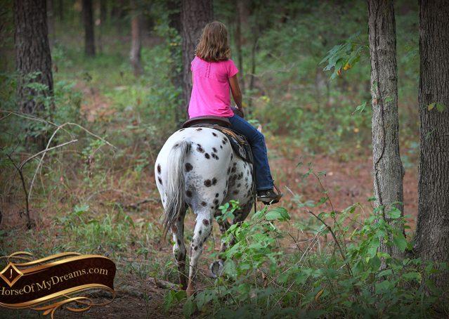 022-Sully-Leopard-appaloosa-POA-kids-pony-fancy-for-sale