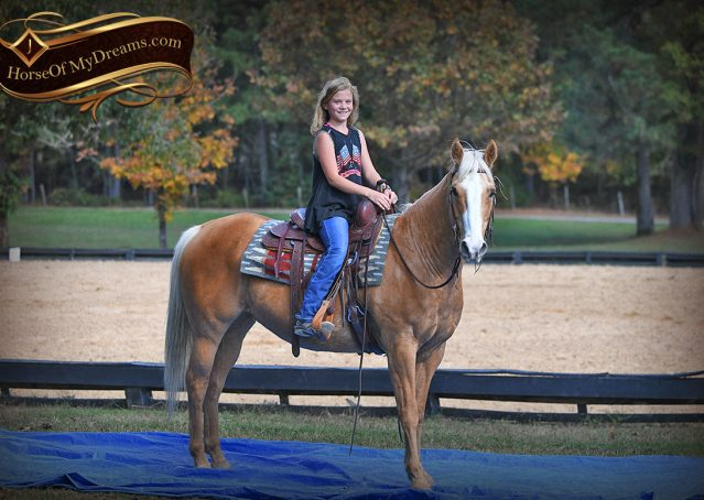 023-Indigo-AQHA-Golden-Palomino-Gelding-For-Sale