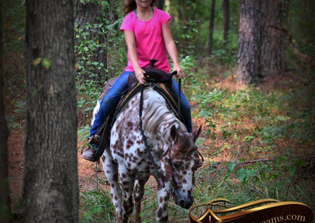 023-Sully-Leopard-appaloosa-POA-kids-pony-fancy-for-sale