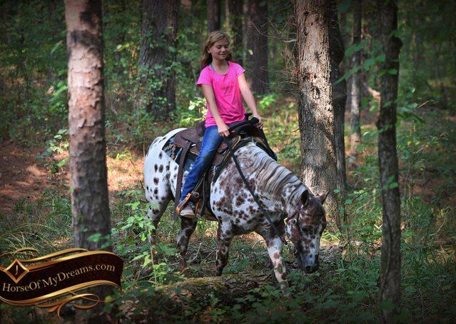024-Sully-Leopard-appaloosa-POA-kids-pony-fancy-for-sale