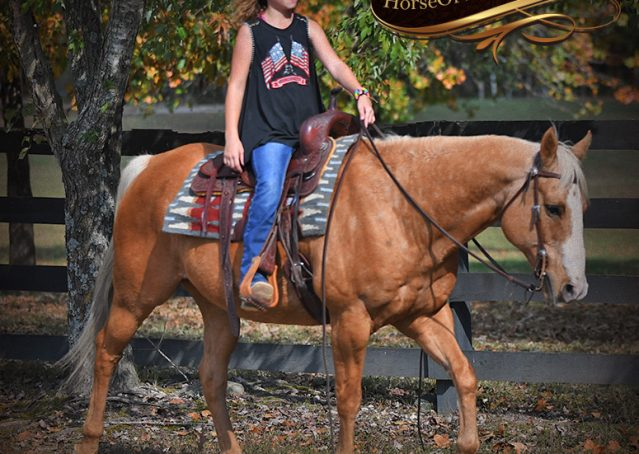 026-Indigo-AQHA-Golden-Palomino-Gelding-For-Sale